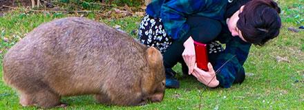 動物の写真を撮る女性